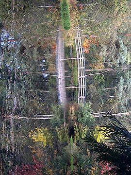 Ven in het bos van Gaasterland von Eugene Brehen