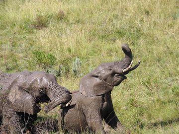 Eléphant avec trompe en haut sur Sanne Bakker