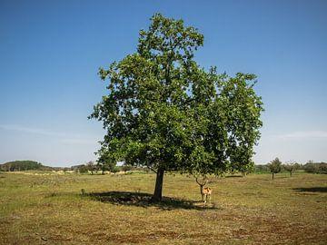 Damhirsche unter einem Baum