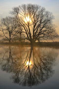 Bäume an der Ruhr 2 van Bernhard Kaiser