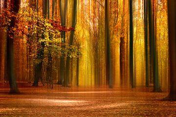 Herbst von Violetta Honkisz