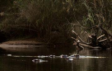 Nijlpaarden 1 van Rob Smit