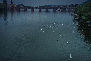 Zwanenmeer in Praag  van Jolanda Wisselo