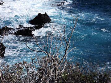 Flora La Palma bij de zee van Paul Emons