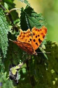 De vlinder van Yrla Lucassen