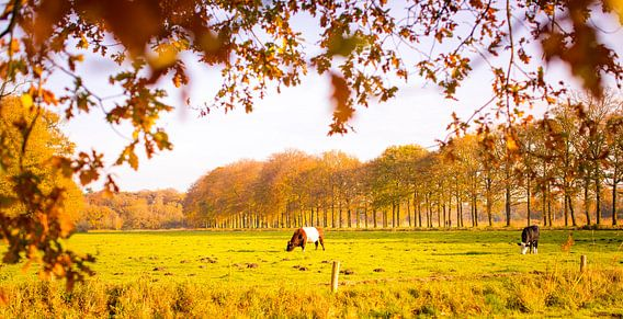 Nederlands landschap  van Shoots by Laura