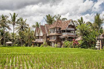 Rijstvelden op Bali - Ubud - Indonesie van Dries van Assen