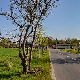 Rapsfeld, Vilmnitz, Insel Rügen von GH Foto & Artdesign