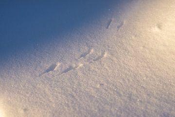 Sporen in de sneeuw van Annemarie Goudswaard