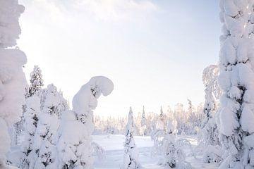 Schnee in Finnisch-Lappland von elma maaskant