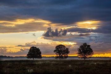Drie Eiken van Arie Flokstra Natuurfotografie