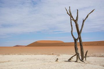 Deadvlei Namibie van Romy Oomen