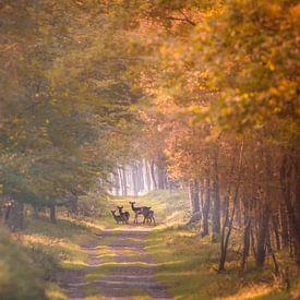 Reetjes in de herfst van Jack Soffers