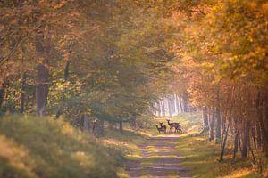 Reetjes in de herfst