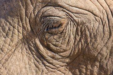Oog van een Afrikaanse olifant. van Ron Poot