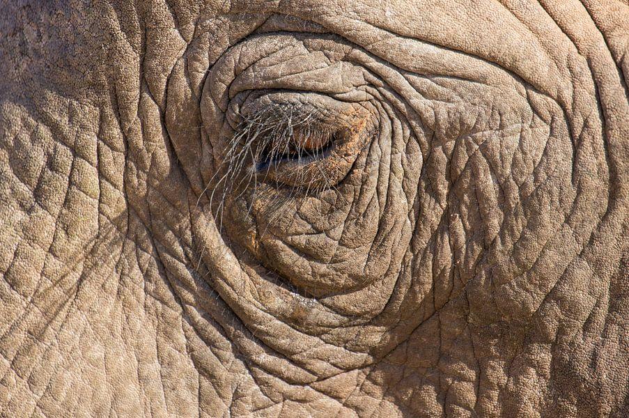 Oog van een Afrikaanse olifant.
