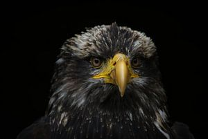 Close-up arend van Jeffrey Dolkens