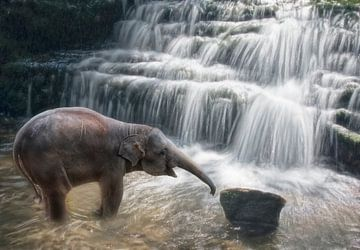 Kleine olifant bij waterval van Marcel van Balken