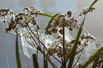 Pflanzen im Morgennebel mit Tau auf Spinnennetz von Trinet Uzun