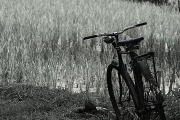 Fiets in het gras zwartwit von Ry Bshvn