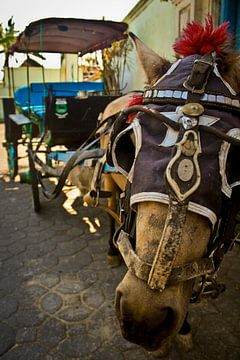 Horse van BL Photography
