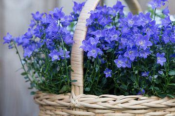 Blumenkorb von Annet Niewold