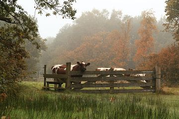 Vaches dans les champs ( Frise ) Automne