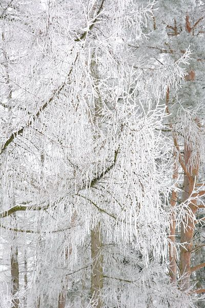 Enchanted Branches van Gisela Scheffbuch