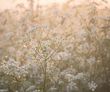 Bloemen in de ochtenzon in de buurt van Haren van Wouter Bos