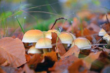 Herfst in de Achterhoek van Jaimy Buunk