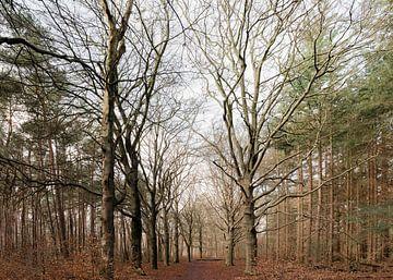 Winters bos van Danielle Bosschaart