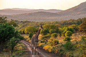 Giraffe in groen landschap van Romy Oomen