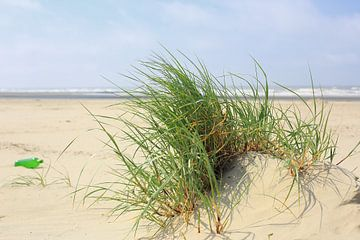 helmgras op het strand van