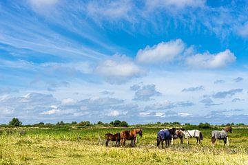 Rust in de paardenwei van Floris van Woudenberg