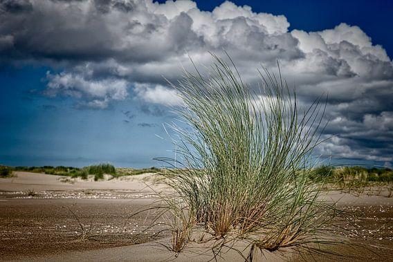 wolken boven de duinen met een closeup van stuk helmgras