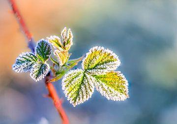 frozen leaf sur Marcel Derweduwen