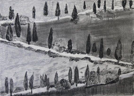 Pijnbomen in Toscane (Pines in Tuscany, Kiefern in Toskana , Pins en Toscane)