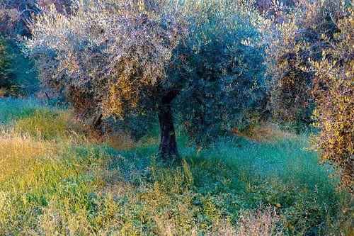 Magic Olive Tree van