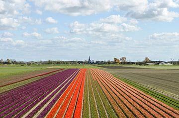 Tulpen uit.... van Marnefoto .nl