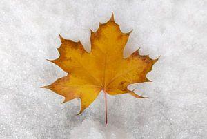 herfst & kamp; winter van Markus Jerko