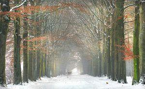 Wouwse plantage in de winter