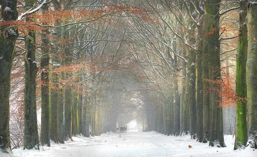 Wouwse plantage in de winter van Teuni's Dreams of Reality