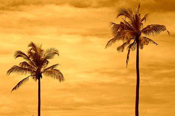 Palm tree sunset van De Rover