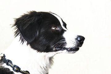 Hundekopf (Wachhund) von Norbert Sülzner