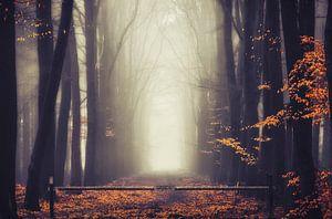 Autumn's gate van