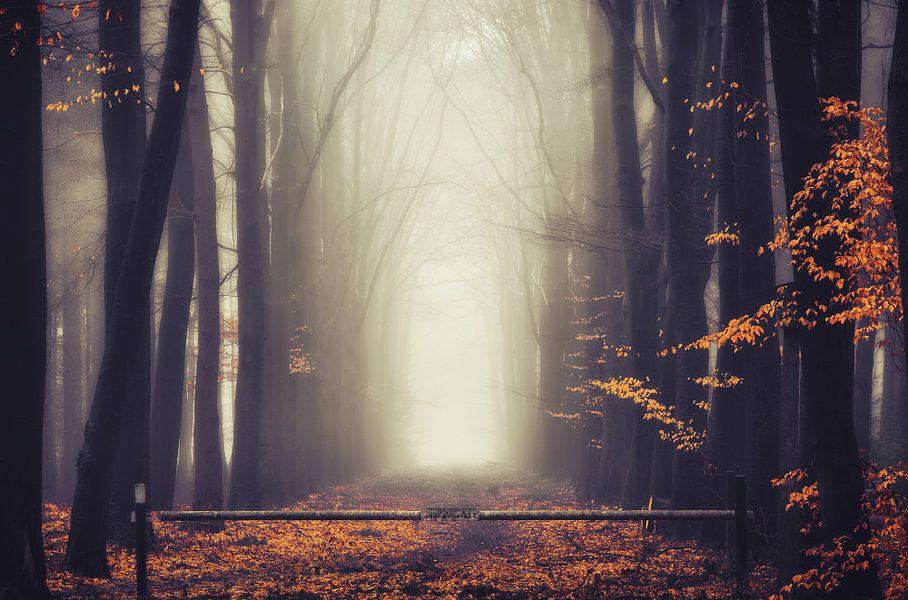 Autumn's gate van Rob Visser
