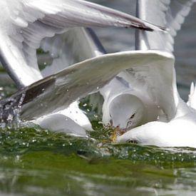 Fish fight - 3 van Erik van Rosmalen