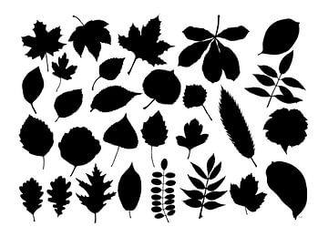 Collage aus Blättern in Schwarz und Weiß von Jasper de Ruiter