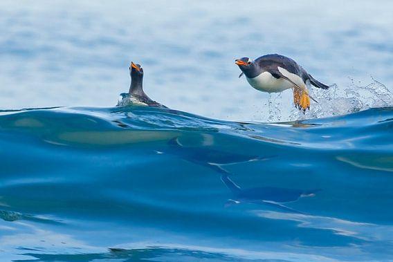 Gentoo Penguin (Pygoscelis papua) van Beschermingswerk voor aan uw muur