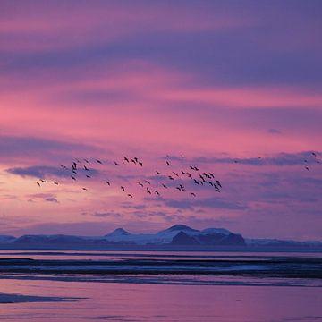 IJskoud IJsland van Aaron de Haas